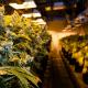 4 Excellent Medical Marijuana Stocks To Buy In 2017